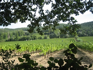 adopt-a-vine experience in an organic vineyard in france