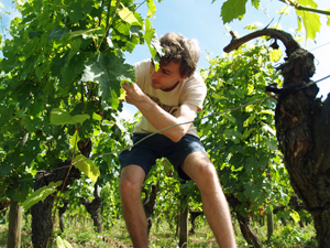 Hands-on wine course in Saint-Emilion, France