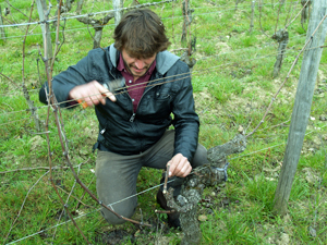Vine pruning gift experience in a French organic vineyard