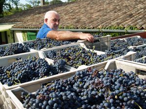 Harvest my own grapes and participate in making my own personalised bottles of organic wine