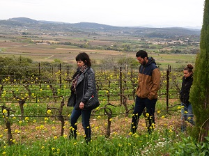 Vine adoption at Domaien Allegria, Languedoc, France