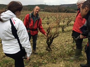 Eric explains how to prune the vines