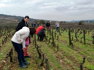 Vineyard tour in Santenay, Burgundy