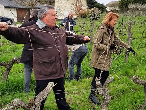 Work in the vineyard course with the winemaker in France