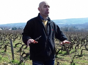 Learn how to prune the vine in a winery in Burgundy, France