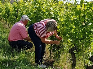 Wine gift, vineyard tour and meeting the winemaker in Chinon France