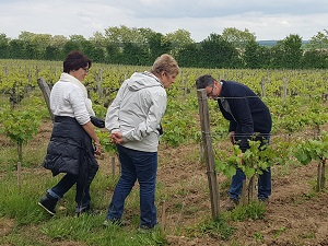 Vineyard tour and winery visit in the Loire Valley, France