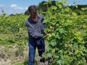 Oenology box vine tending experience in the Loire Valley