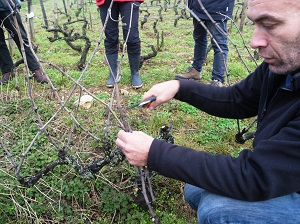 Wine-making and vine pruning course in France