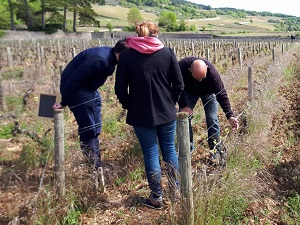 Organic vineyard visit in Burgundy France