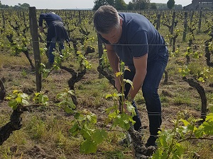 Get involved in the making of your own wine in Loire, France