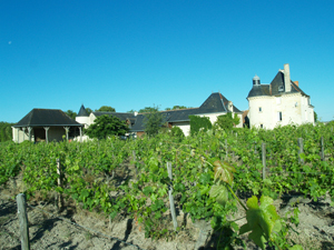 Adopt-a-vine experience in Chinon, France