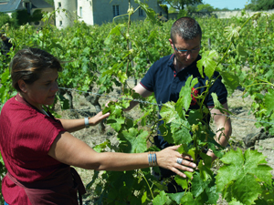 Wine-making course in the Loire Valley, France