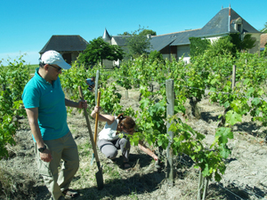Wine-making course in Chinon, France