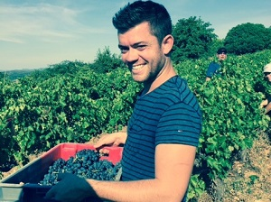 Harvest experience day in a French vineyard