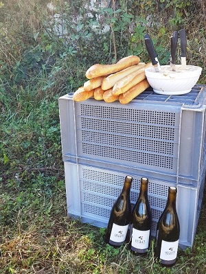 Typical harvest day in a french winery as a gift box