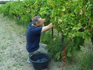 Harvest Experience in the Rhone Valley region