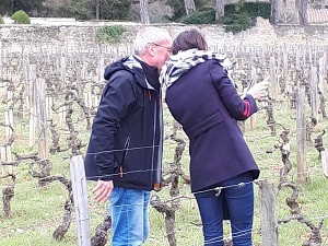 Organic vines adoption and day at the winery in Burgundy, France