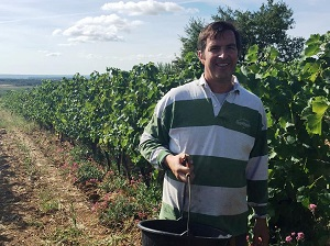 Early harvest in 2018 in France for organic vineyards