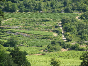 Visit french vines area with Gourmet Odyssey