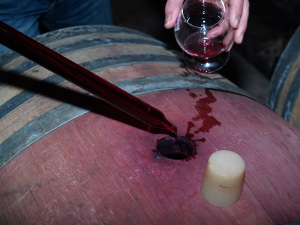 learn winemaking with a winemaker during the Vinification Experience Day