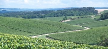 Adopt a Vine in Chablis Now Available!