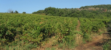 Wine Experience in Languedoc