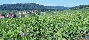 Wine Experience in Alsace