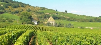 Wine Experience in Burgundy