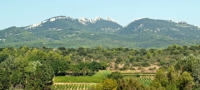 Wine Experience in the Rhone Valley