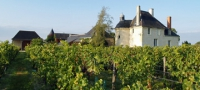 Wine Experience in the Loire Valley
