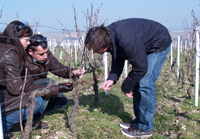 Wine Experience Christmas Gift.  Visit a French vineyard and partcipate in the winemaking.