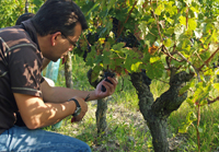 Original christmas wine present. Adopt vines in France for your Christmas Gift