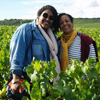 Customer reference, harvest experience gift experience in Chablis