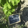 Customer reference, adopt a vine, Cotes du Rhone, France