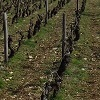 Customer reference, vine pruning experience gift experience in Burgundy, France
