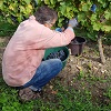 Customer reference, adopt an organic vine, Loire Valley, France