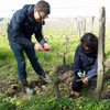 Customer feedback, sponsor a vine in Saint Emilion and make your own organic wine