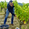 Customer reference, rent a vine and harvest experience gift, Cotes du Rhone, France