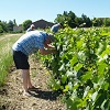 Customer reference, rent a vine gift and vineyard tending experience, Burgundy, France