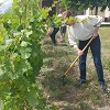 Customer feedback, vineyard tending experience gift box in Loire Valley