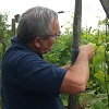 Customer rating, adopt your own plot of vines, alsace, France