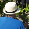 Customer feedback, organic vine adoption, Cotes du Rhone, France