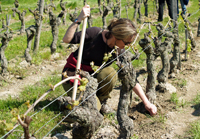 Original Wine Experience Gift for a mother's day present.  Rent vines in France.