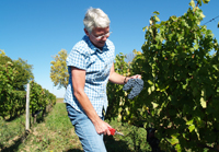Mother's Day wine gift.  Rent-a-vine in France and make your own wine.
