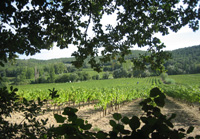 Original newborn baby gift for parents. Adopt-a-vine in the Rhone Valley and participate in making personalised bottles of wine labeled with the baby's name