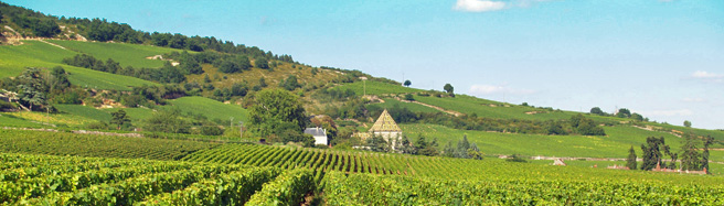 Gastronomy and wine experience gifts in Burgundy, France