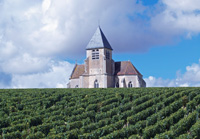 Organic Wedding Gift Idea.  Rent a vine at Domaine Jean-Marc Brocard, Chablis, Burgundy, France
