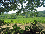 Rent-a-vine in the Rhone Valley and participate in making your personalised bottles of wine