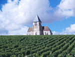 Adopt-a-vine in Chablis France and learn how to make wine with the Gourmet Odyssey Wine Experience
